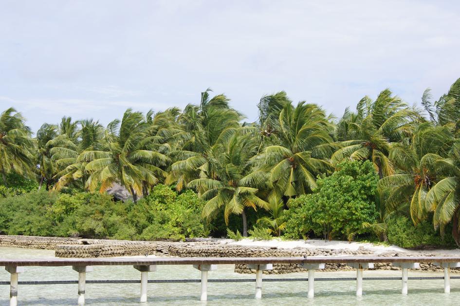 Hema_maldives_chayaa_lagoon_hakuraa_huraa_coconut_trees