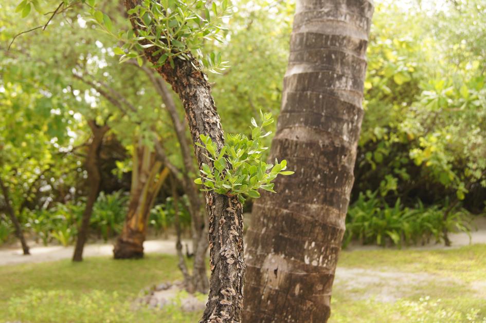Hema_maldives_chayaa_lagoon_hakuraa_huraa_garden2