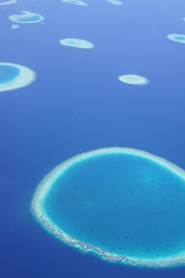 Hema_maldives_coral2