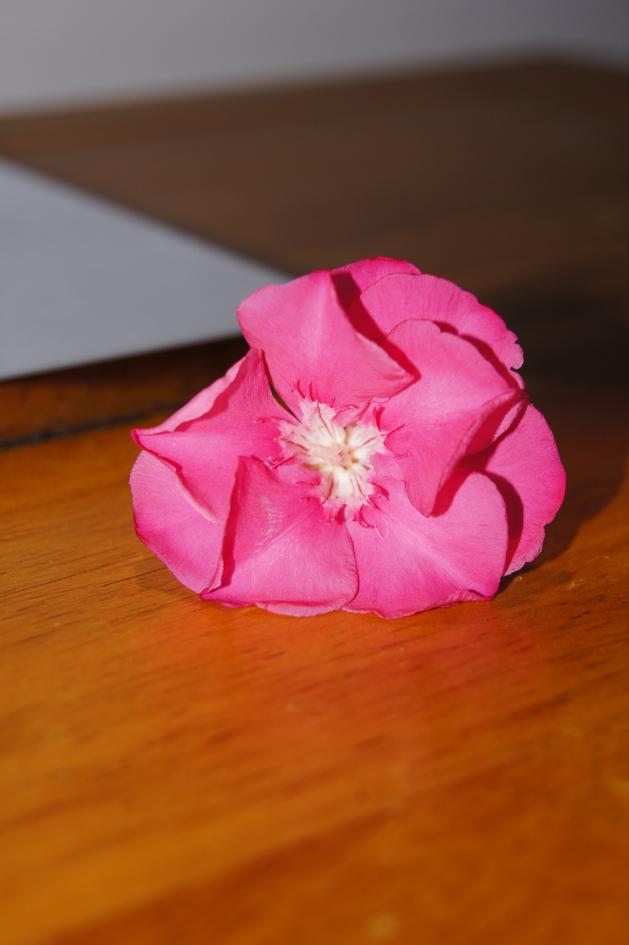 Hema_maldives_hibiscus