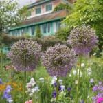 Fondation Claude Monet à Giverny : le paradis des fleurs
