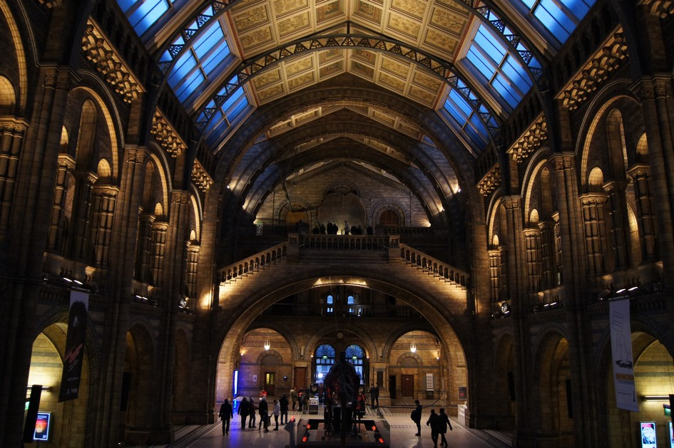 Hema_natural_history_museum_london16