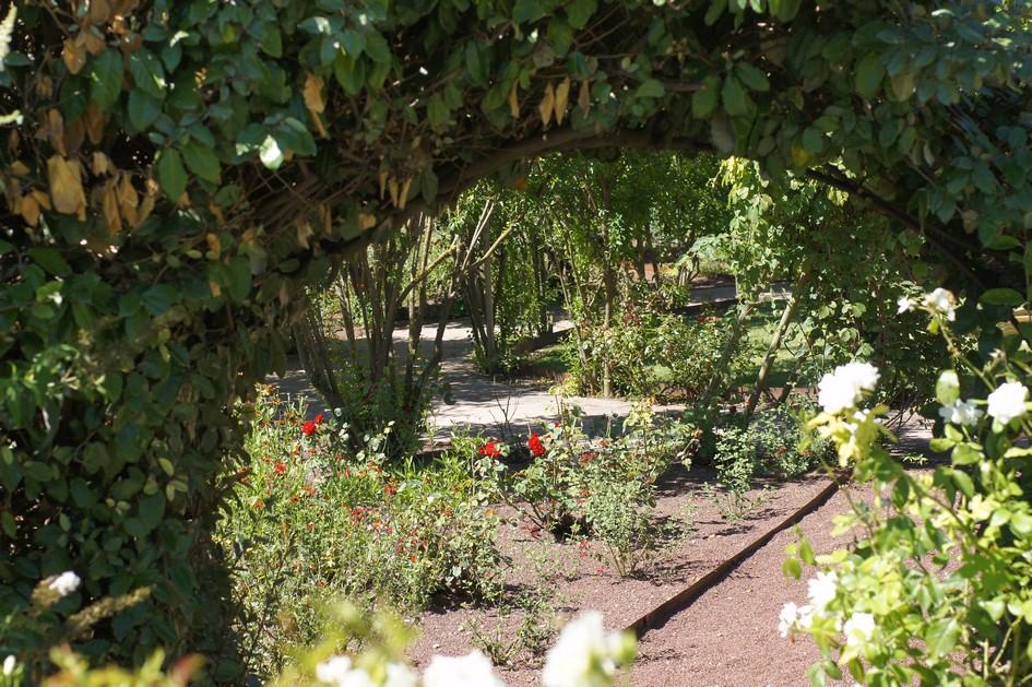 Hema_le_jardin_de_l_alchimiste44