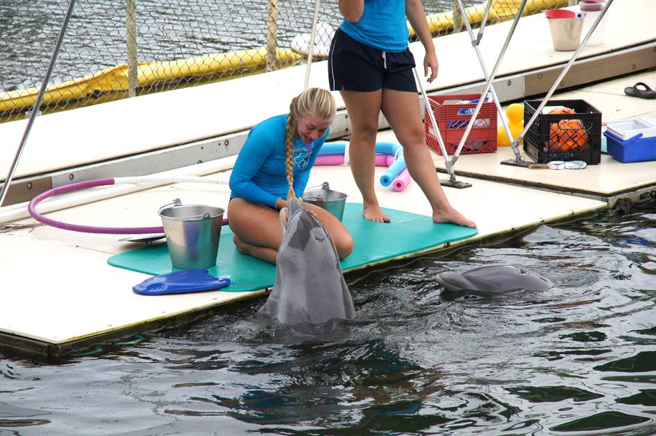 Hema_nager_avec_les_dauphins_dolphin_plus10