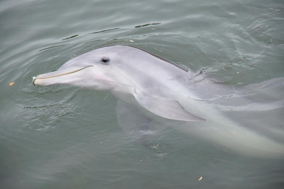 Hema_nager_avec_les_dauphins_dolphin_plus12