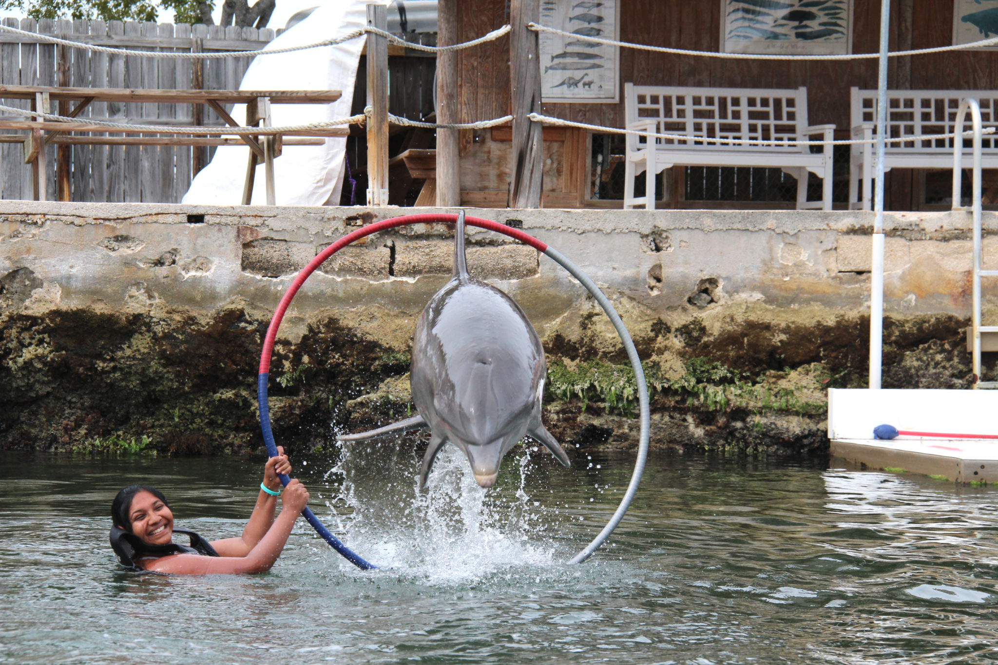 Hema_nager_avec_les_dauphins_dolphin_plus18