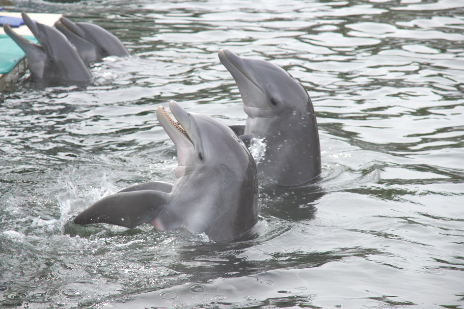 Hema_nager_avec_les_dauphins_dolphin_plus4