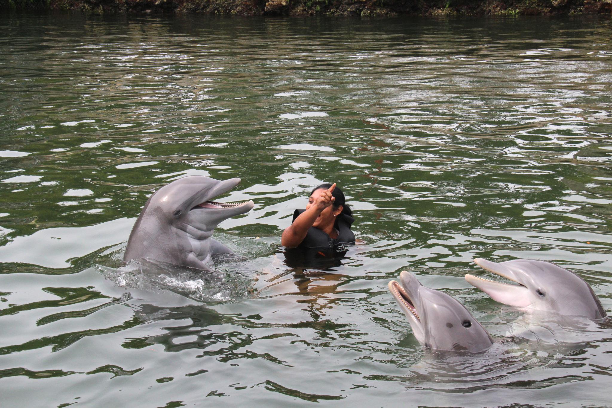 Hema_nager_avec_les_dauphins_dolphin_plus8