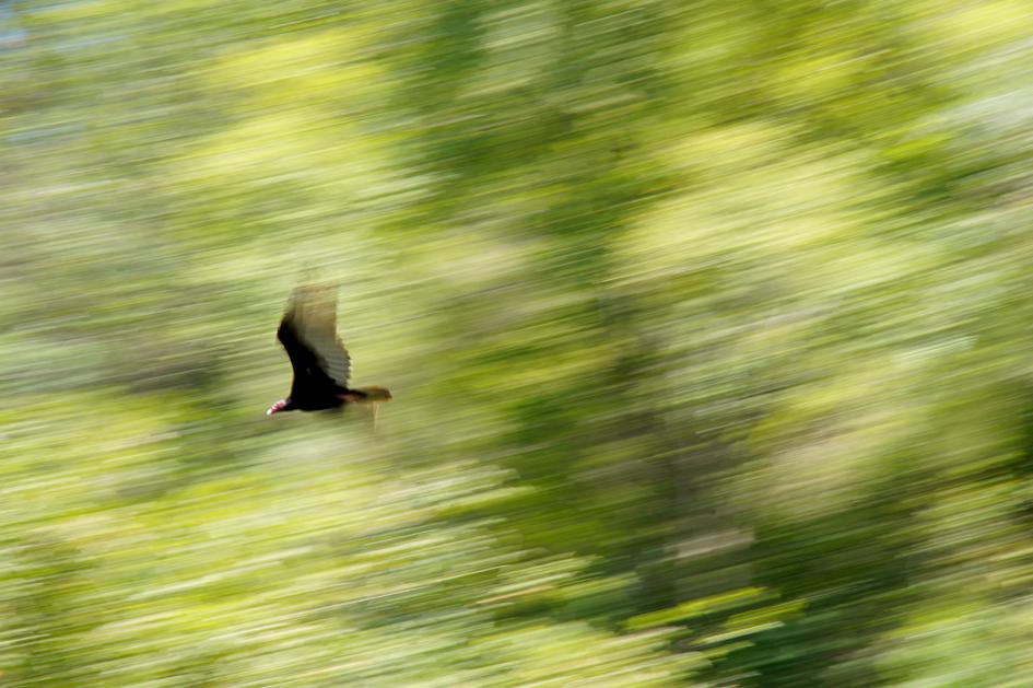 hema_cuba_baracoa_oiseau