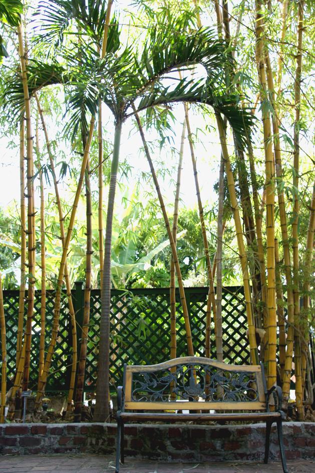 hema_florida_key_west_hemingway_garden1