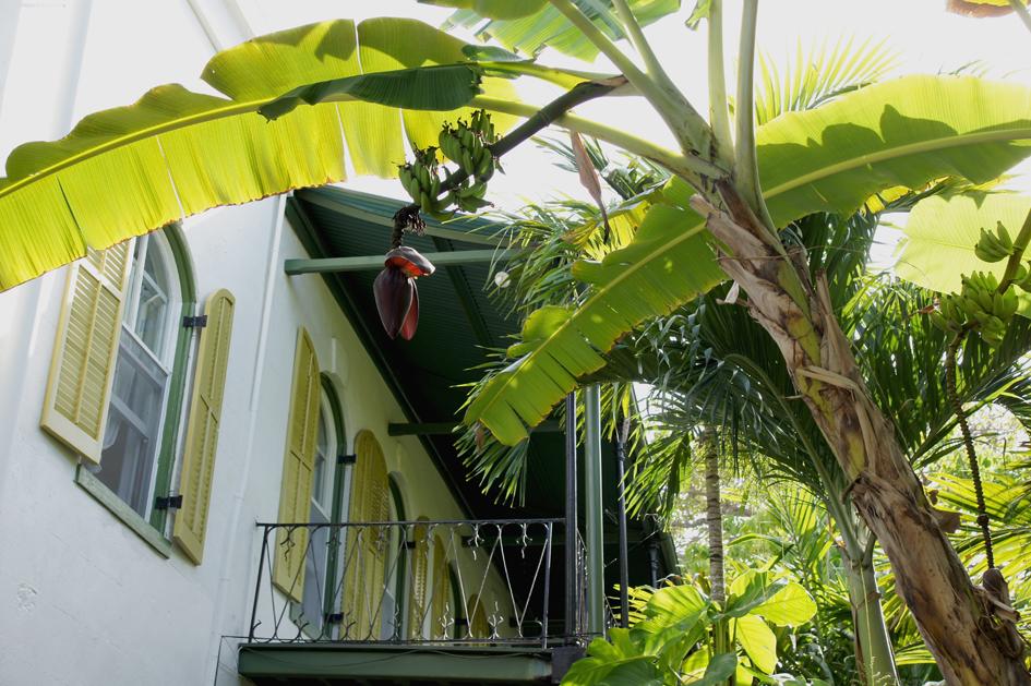 hema_florida_key_west_hemingway_garden3