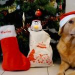Bailey et la Woufbox de Noël