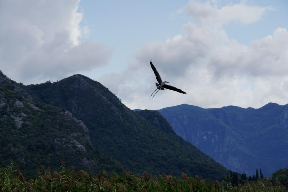 Hema_Montenegro_Virpazar_Lake_Skadar_bird_Blog_Voyage_Travel8