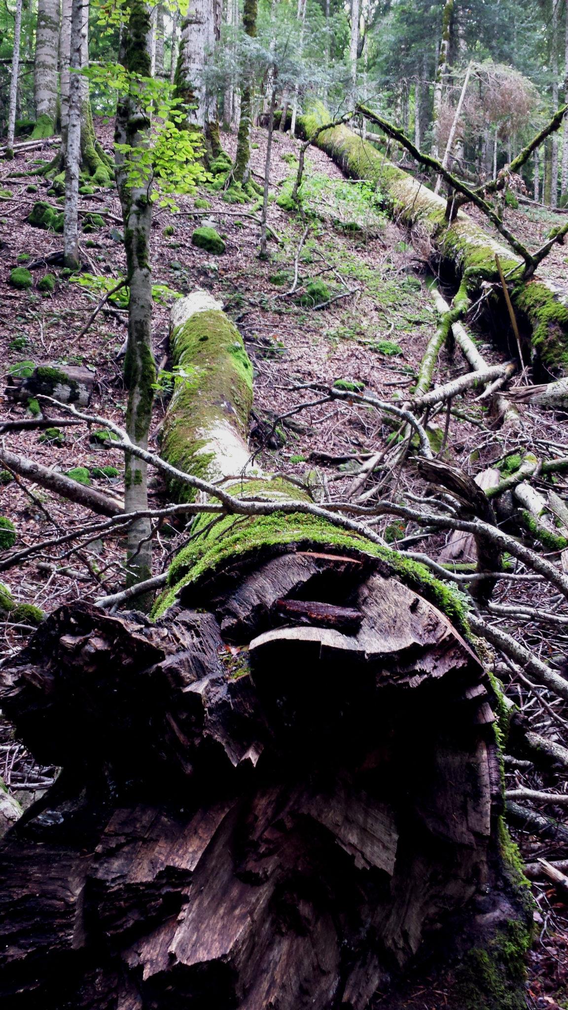 Hema_Montenegro_parc_national_biogradska_gora_forest_travel_voyage_blog12