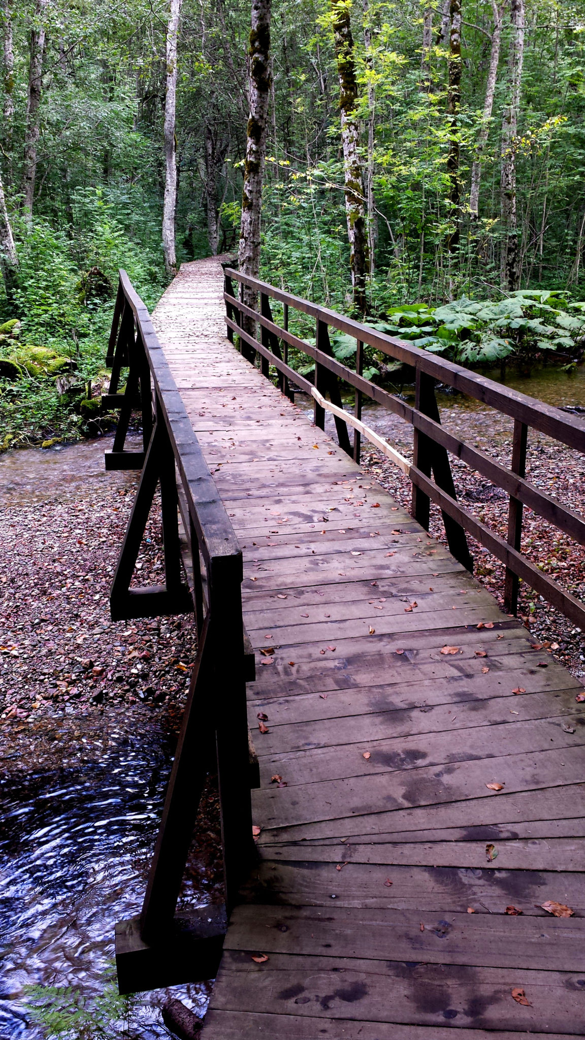 Hema_Montenegro_parc_national_biogradska_gora_forest_travel_voyage_blog13