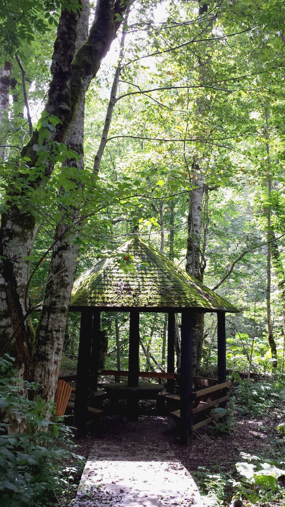 Hema_Montenegro_parc_national_biogradska_gora_forest_travel_voyage_blog15