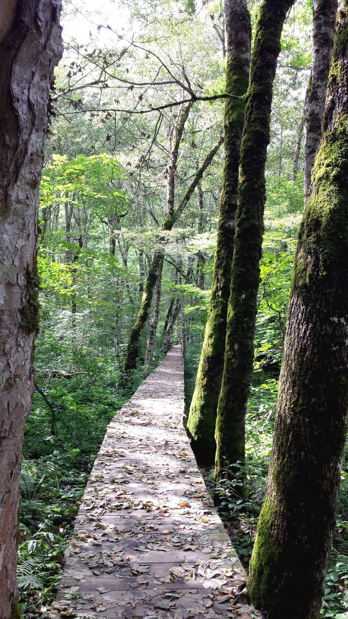 Hema_Montenegro_parc_national_biogradska_gora_forest_travel_voyage_blog17
