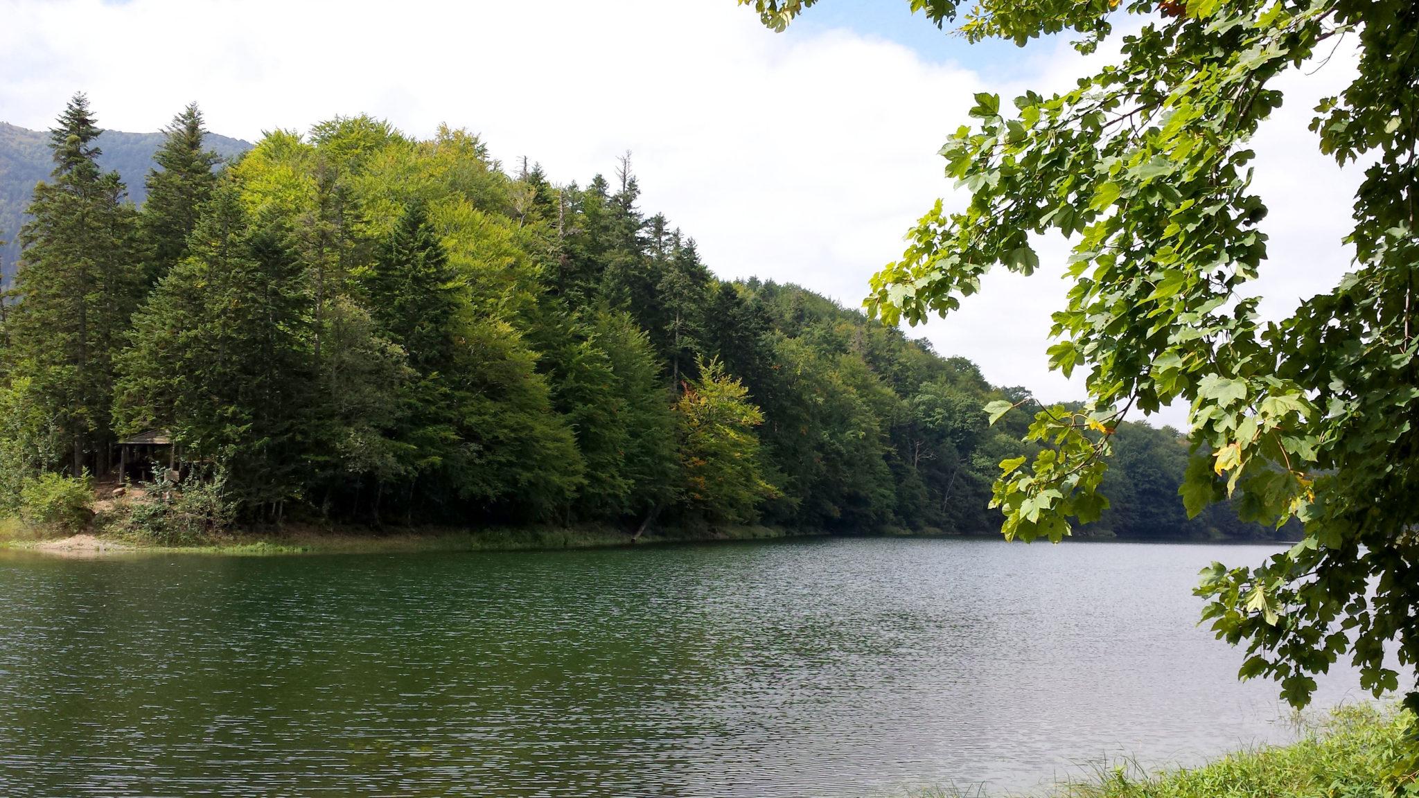 Hema_Montenegro_parc_national_biogradska_gora_forest_travel_voyage_blog19