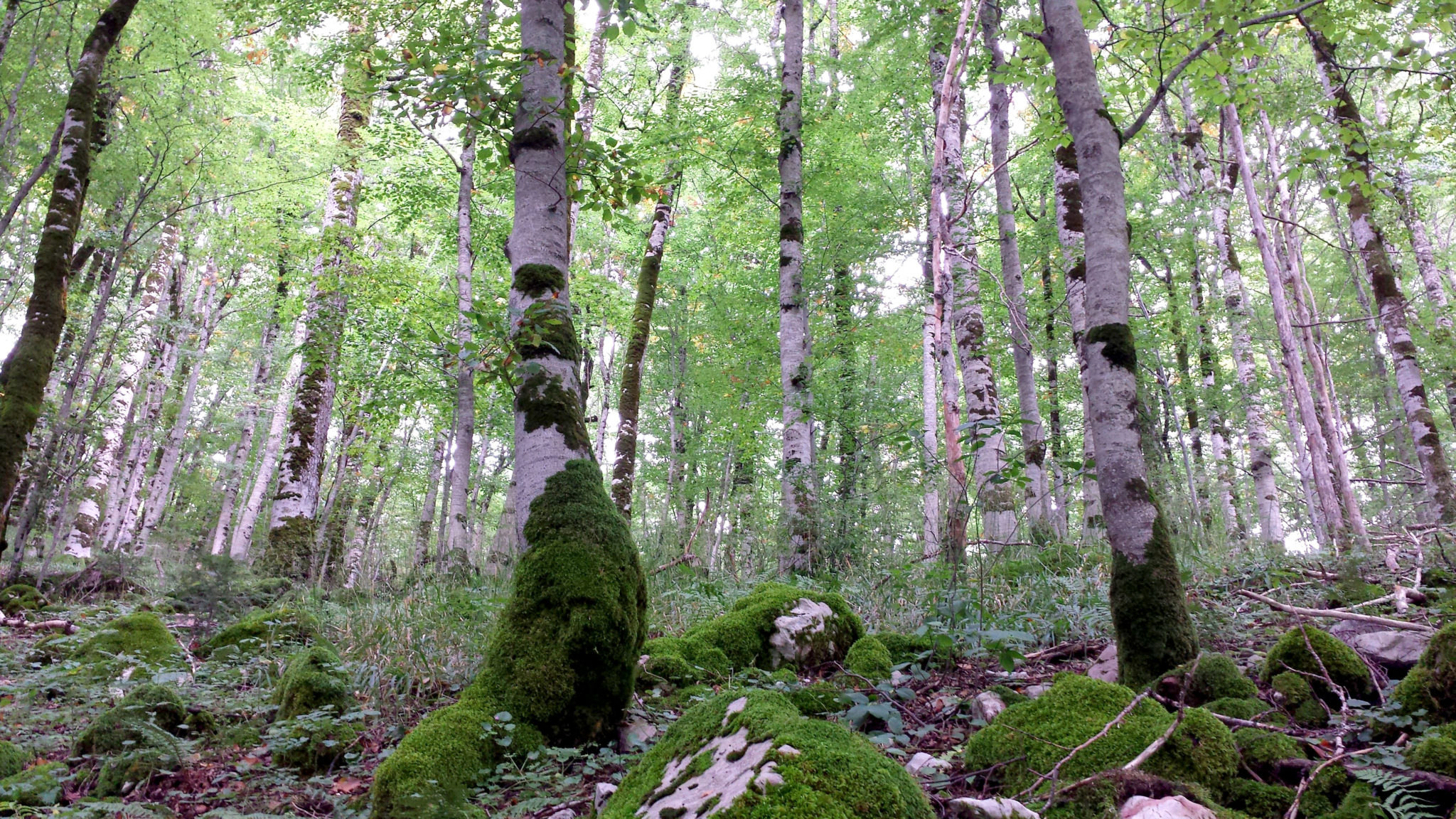 Hema_Montenegro_parc_national_biogradska_gora_forest_travel_voyage_blog4