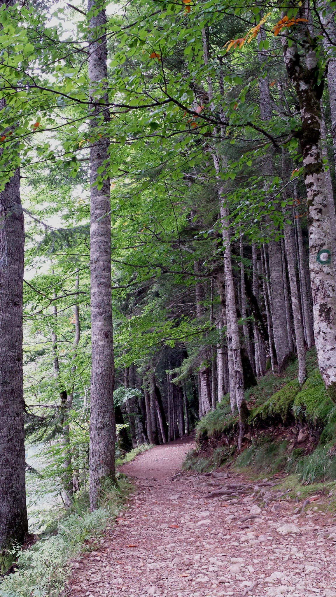 Hema_Montenegro_parc_national_biogradska_gora_forest_travel_voyage_blog5