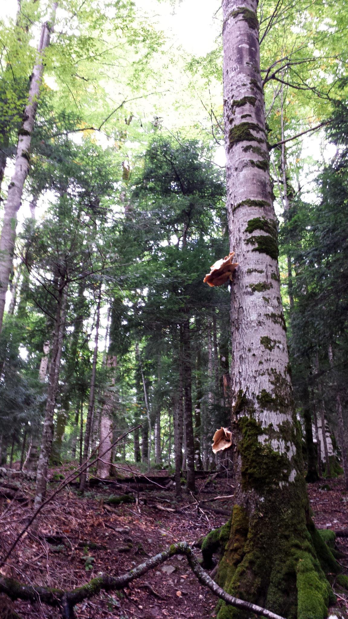 Hema_Montenegro_parc_national_biogradska_gora_forest_travel_voyage_blog8