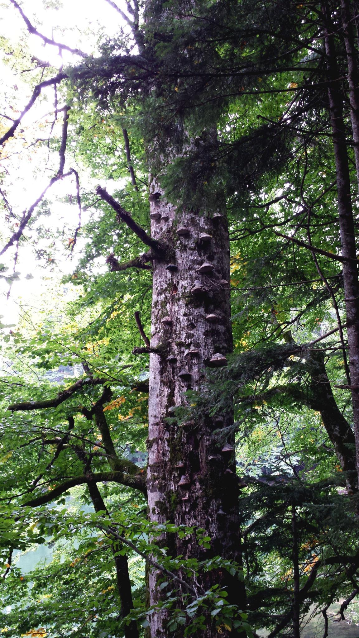 Hema_Montenegro_parc_national_biogradska_gora_forest_travel_voyage_blog9