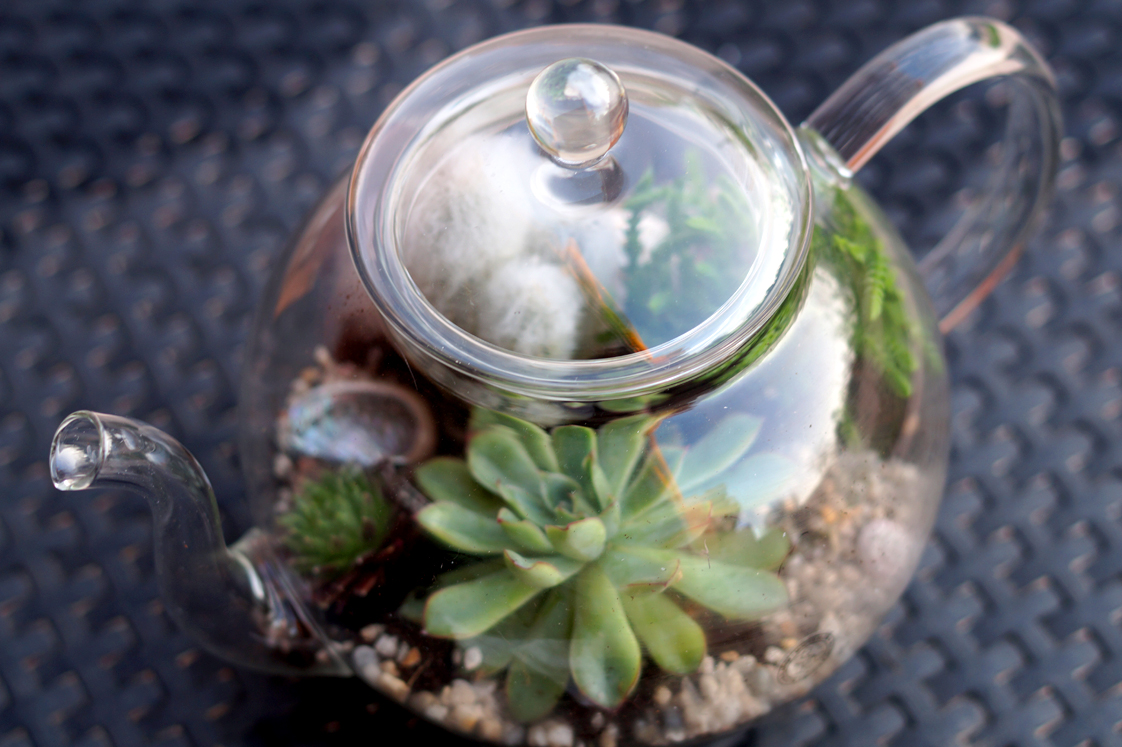 diy la th i re terrarium comment se r aliser un jardin. Black Bedroom Furniture Sets. Home Design Ideas