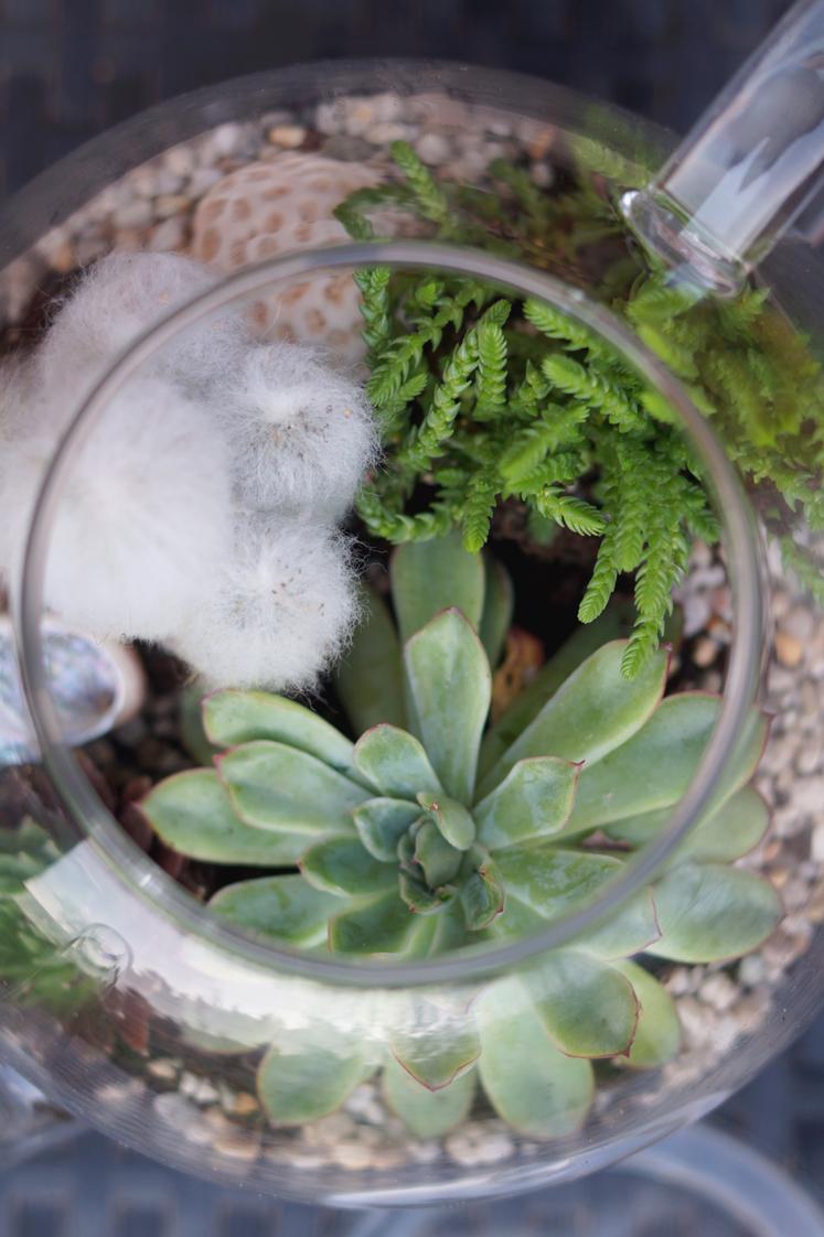 Hema_pose_ses_valises_jardin_d'intérieur_terrarium_theiere_diy_7