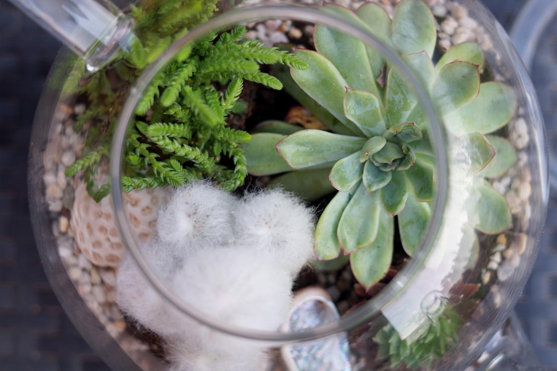 Hema_pose_ses_valises_jardin_d'intérieur_terrarium_theiere_diy_9