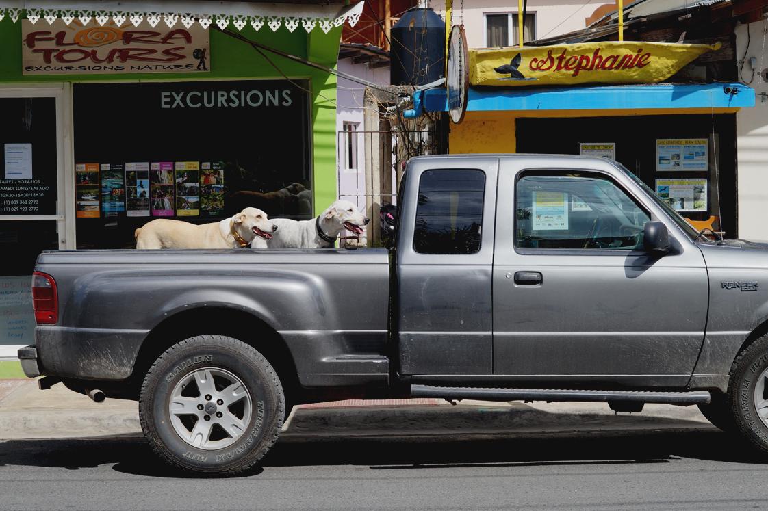 Hema_pose_ses_valises_republique_dominicaine_las_terrenas_dogs_7