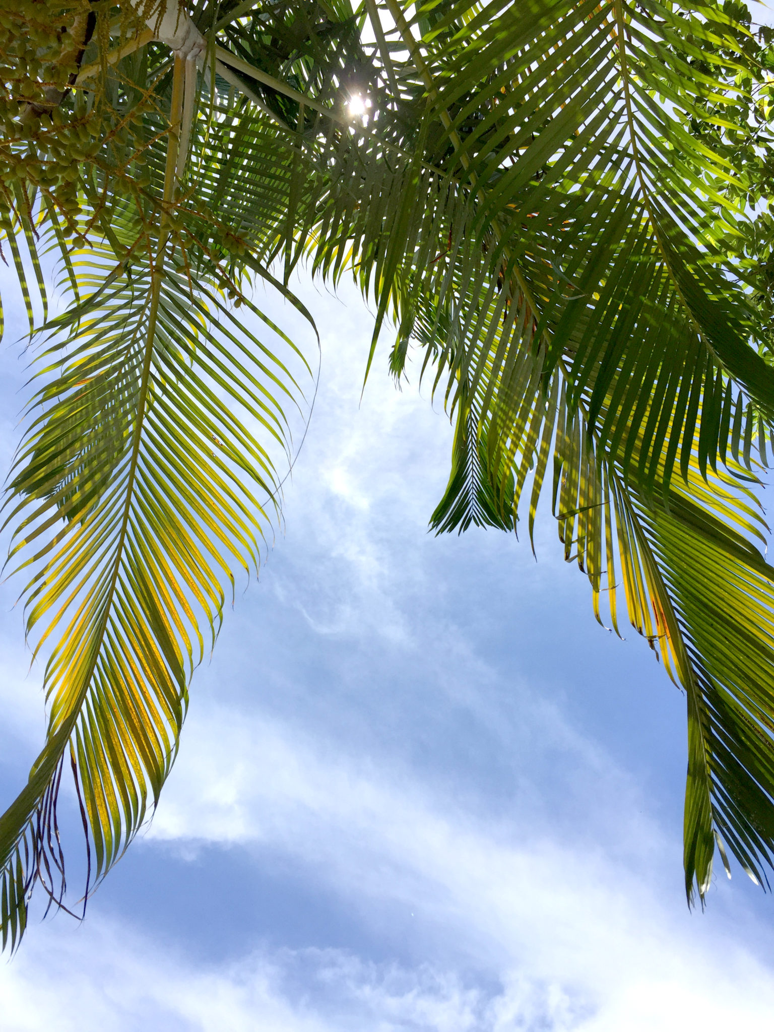 Republique_dominicaine_damajagua_palmtree