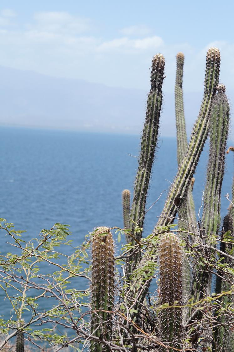 Republique_dominicaine_lago_enriquillo_las_caritas_escalier_cactus_vue