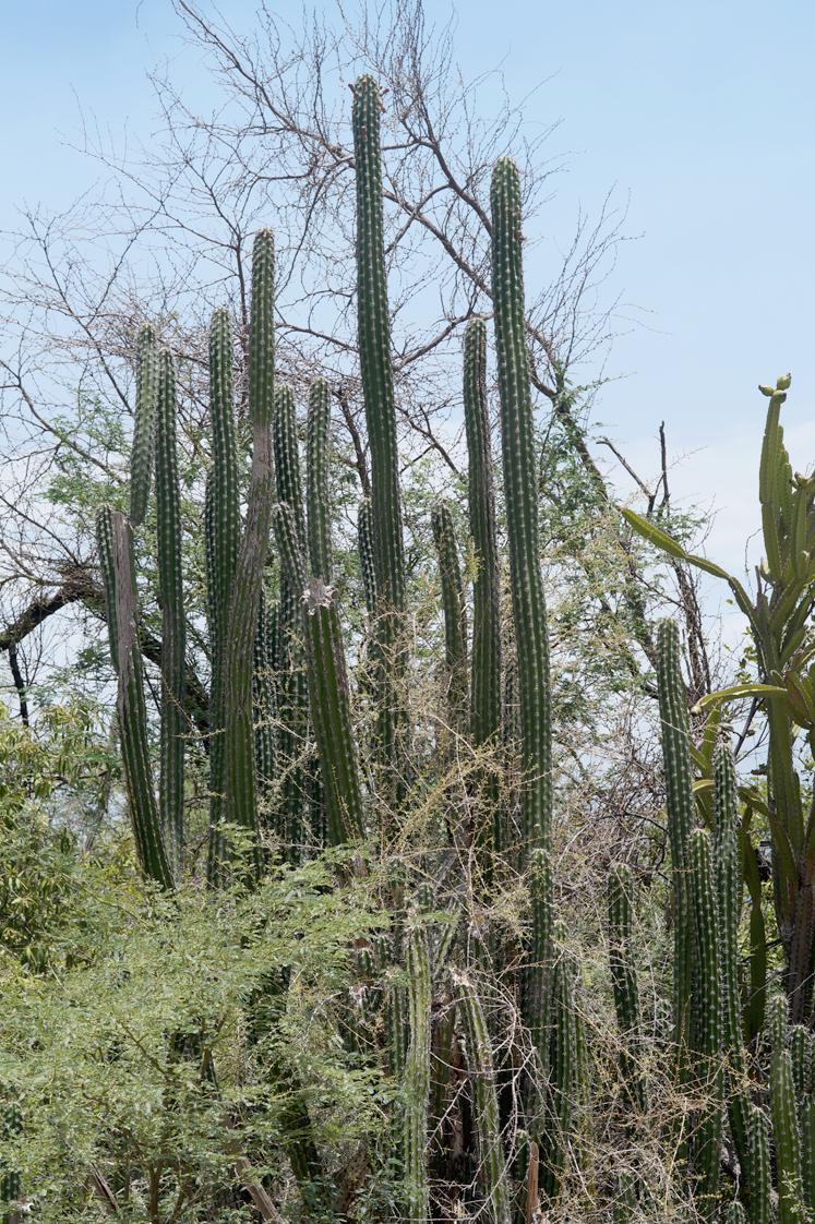 Republique_dominicaine_lago_enriquillo_paysage_mangrove_cactus