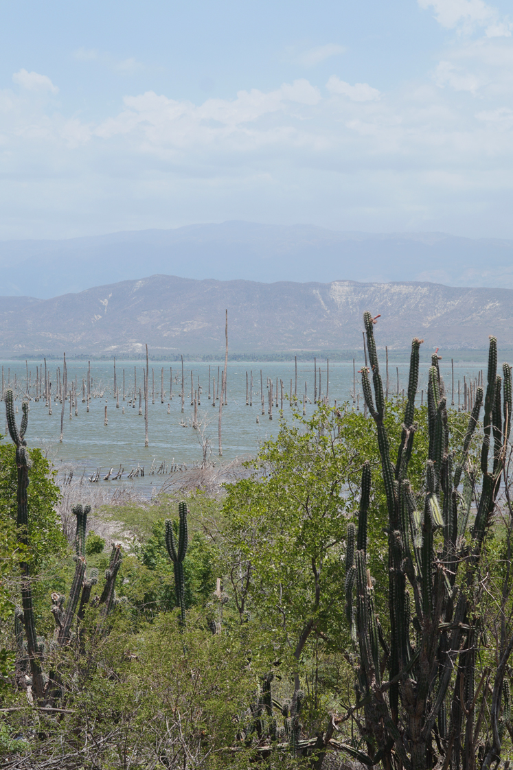 Republique_dominicaine_lago_enriquillo_paysage_mangrove_cactus_side