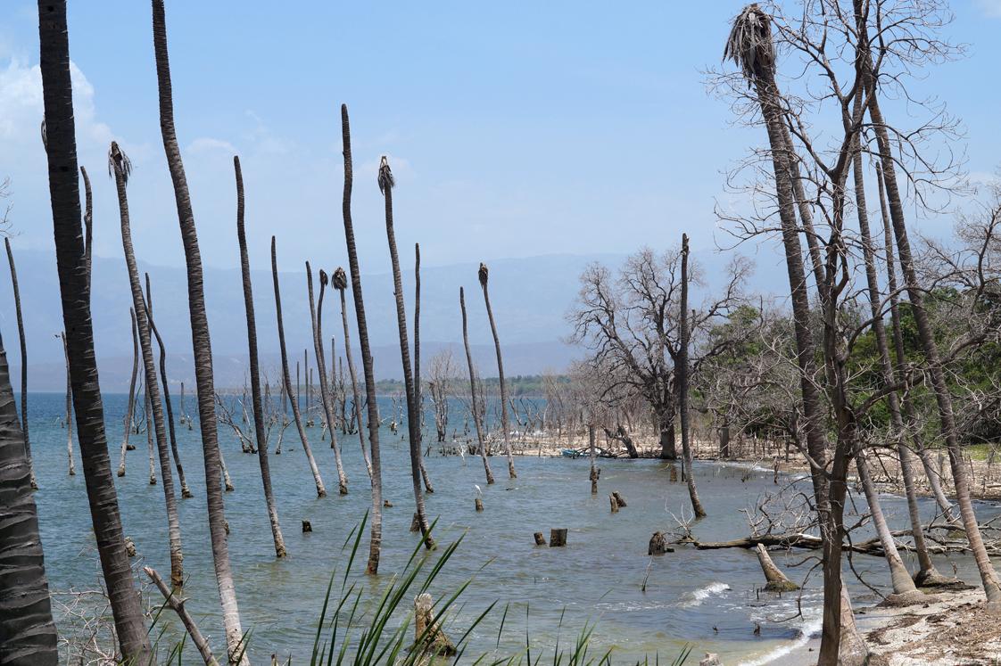 Republique_dominicaine_lago_enriquillo_paysage_mangrove_nord