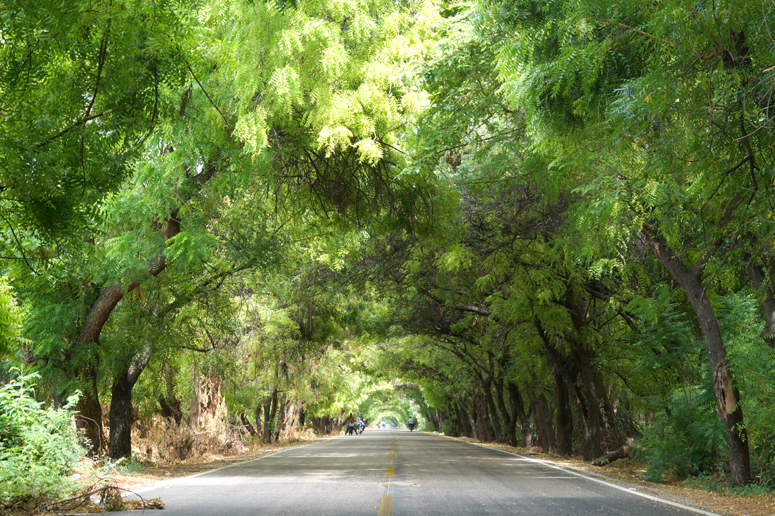 Republique_dominicaine_route_lago_enriquillo_allee_arbres_verts
