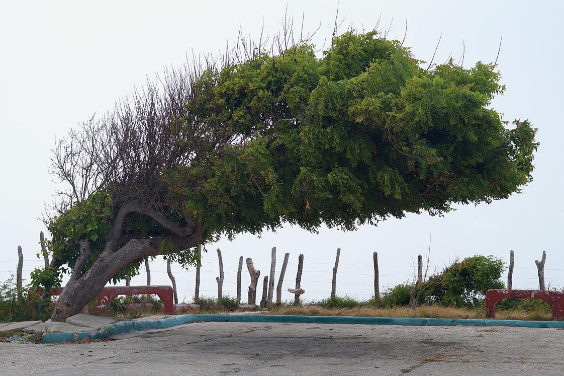 Roadtrip_republique_dominicaine_arbre_penchee_route_sud