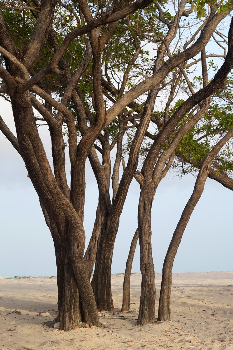 Roadtrip_republique_dominicaine_barahona_beach_trees