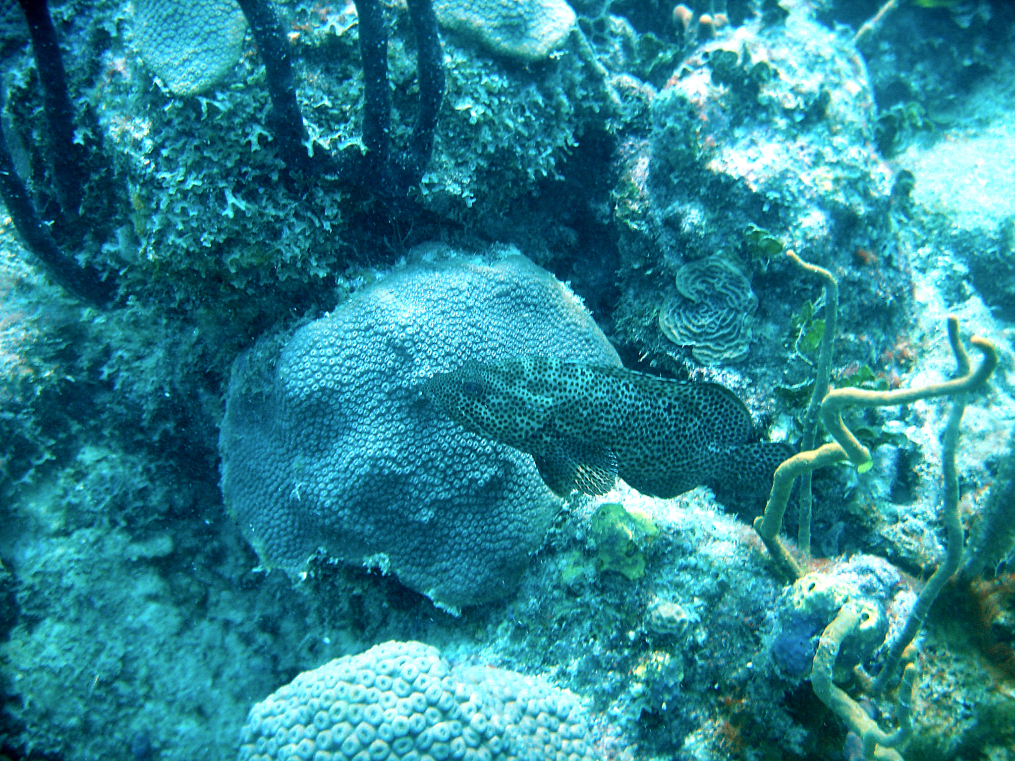 Republique_dominicaine_roadtrip_bayahibe_plongee_atlantic_princess_poisson_coraux