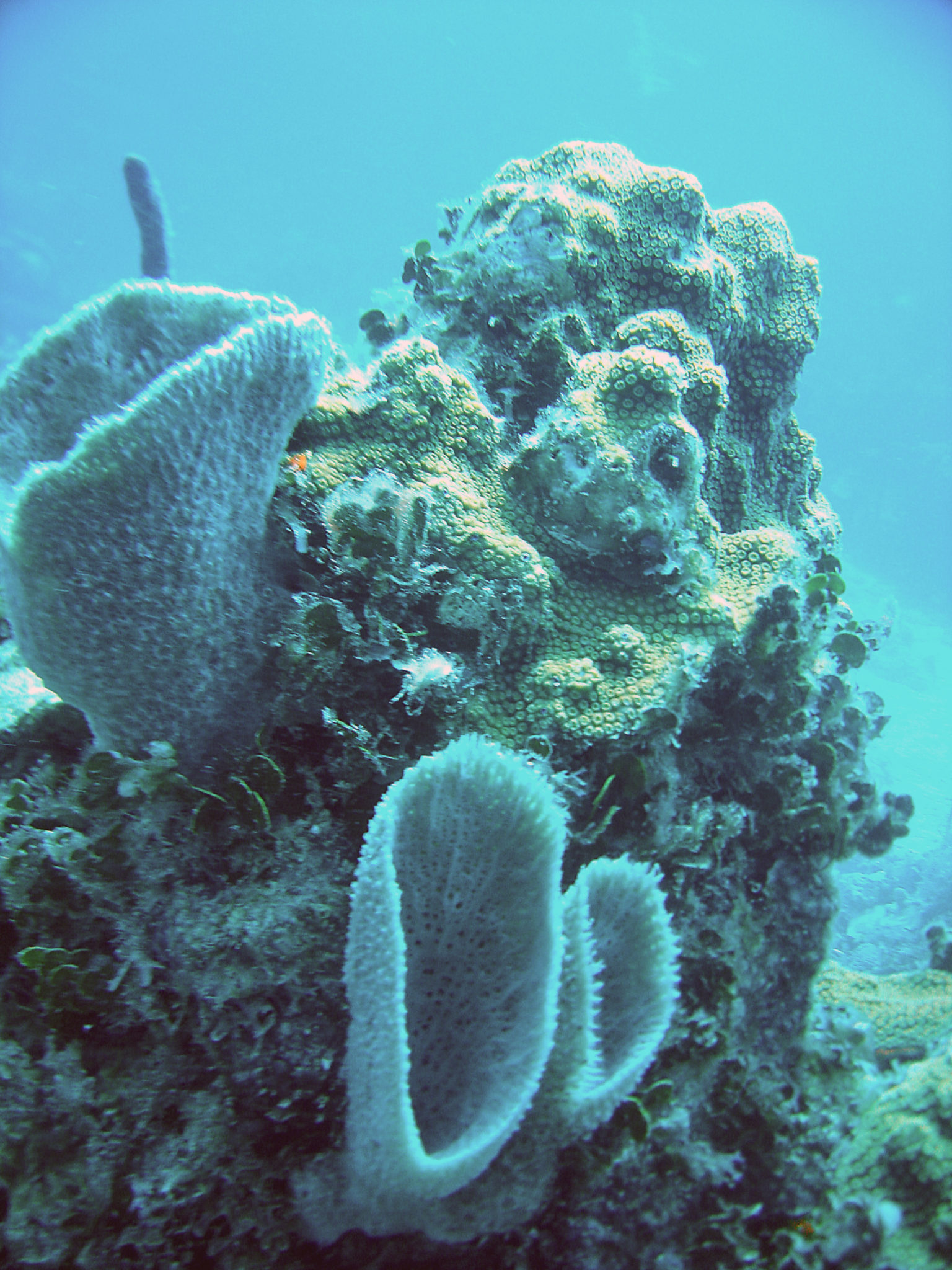 Republique_dominicaine_roadtrip_bayahibe_plongee_scubafun_coral_dominicus_reef