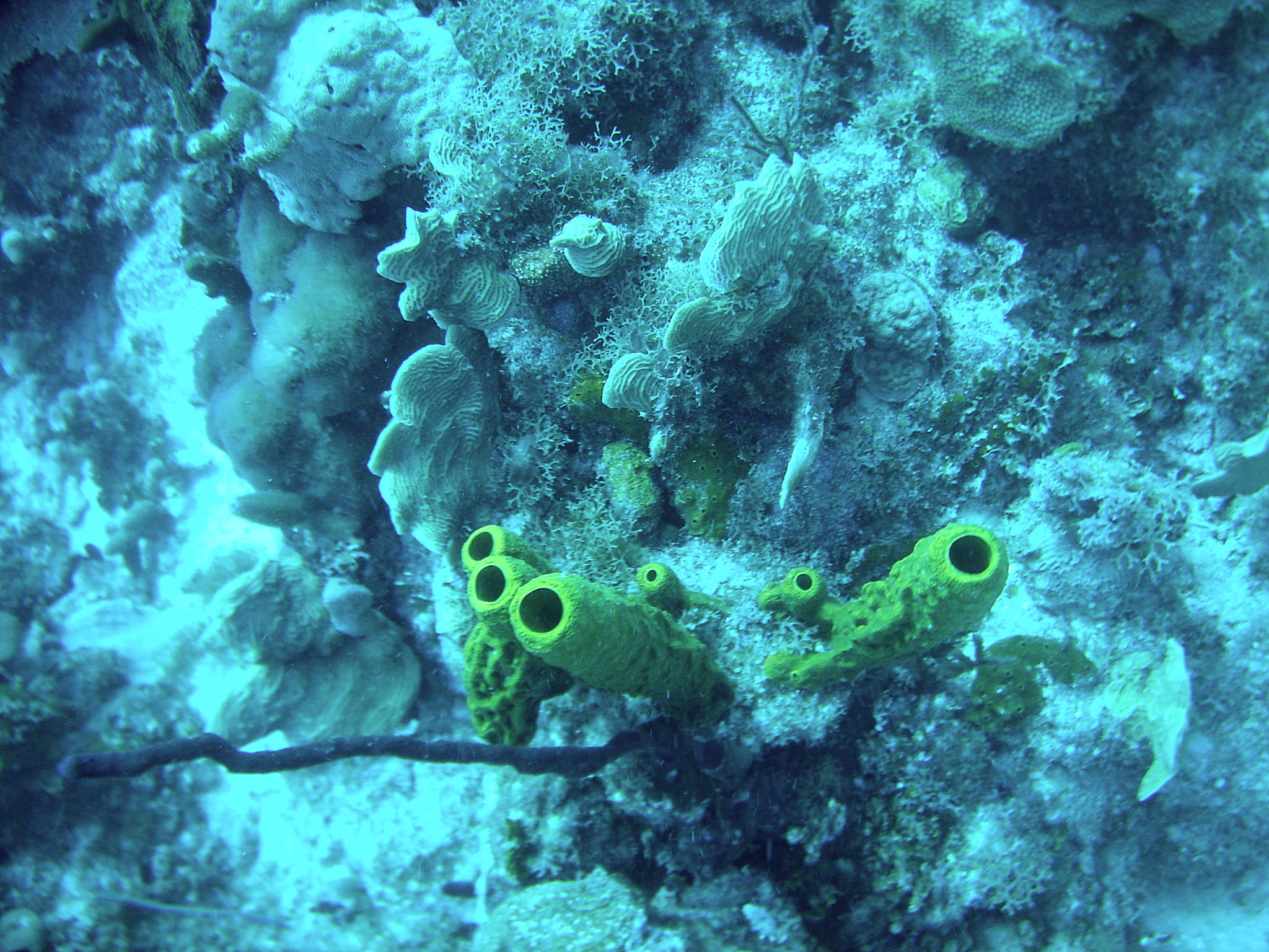 Republique_dominicaine_roadtrip_bayahibe_plongee_scubafun_coraux_dominicus_reef