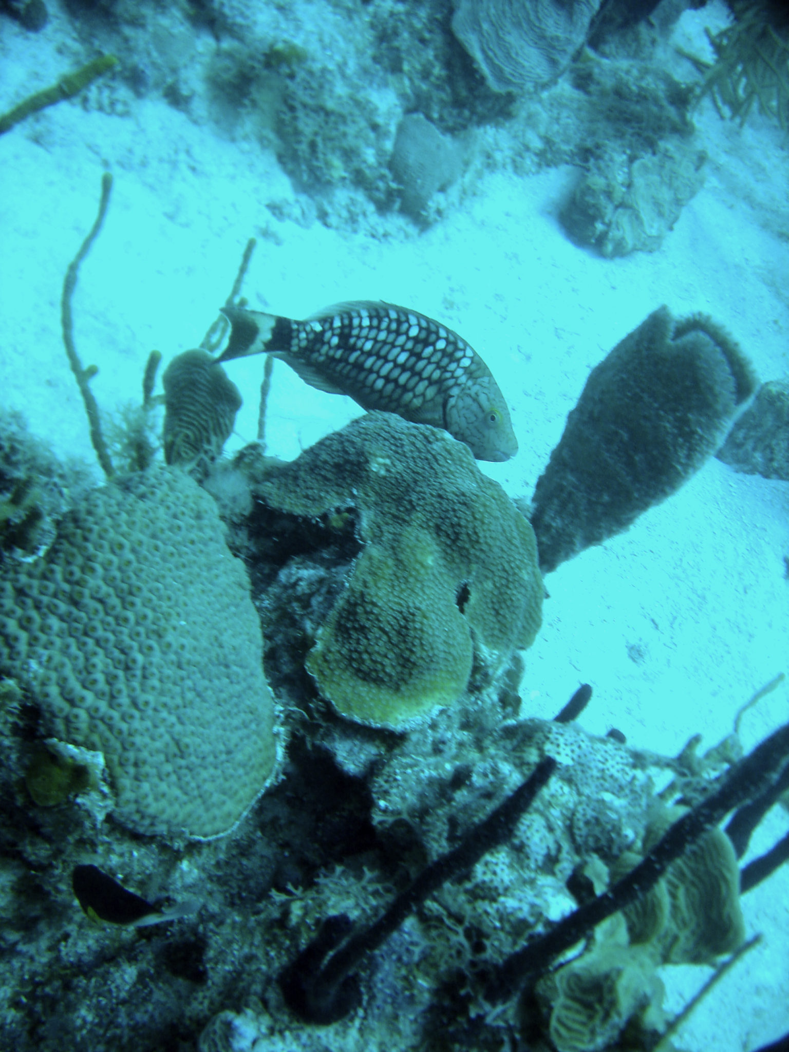 Republique_dominicaine_roadtrip_bayahibe_plongee_scubafun_coraux_poisson_dominicus_reef
