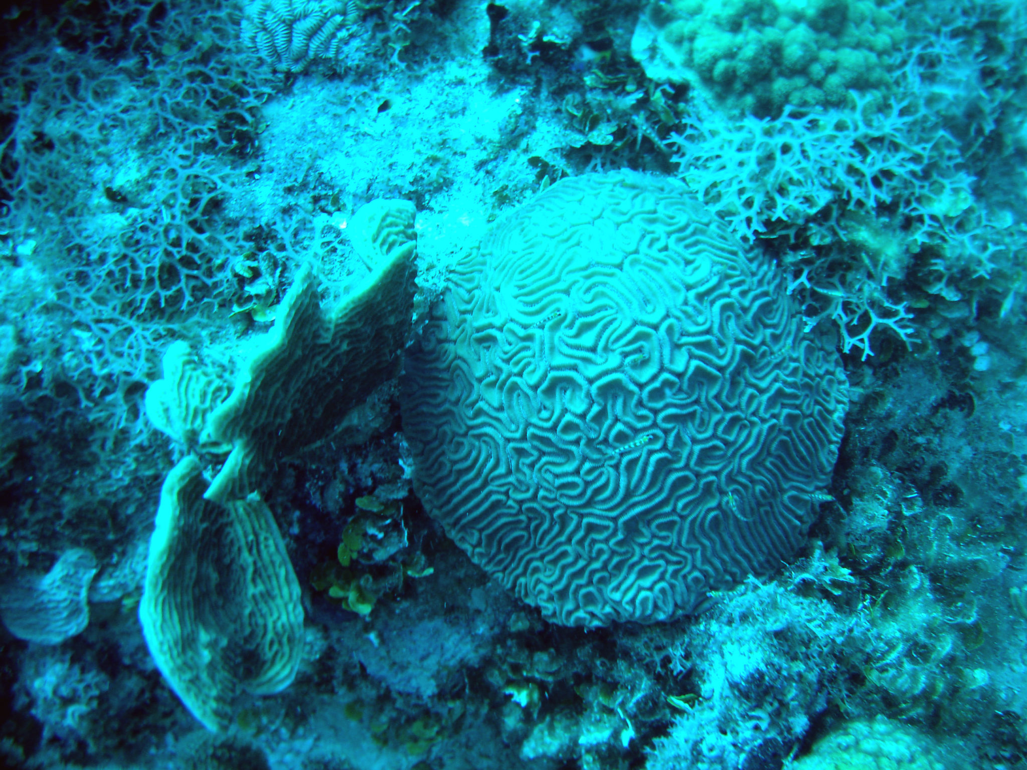 Republique_dominicaine_roadtrip_bayahibe_plongee_scubafun_coraux_ronds_dominicus_reef