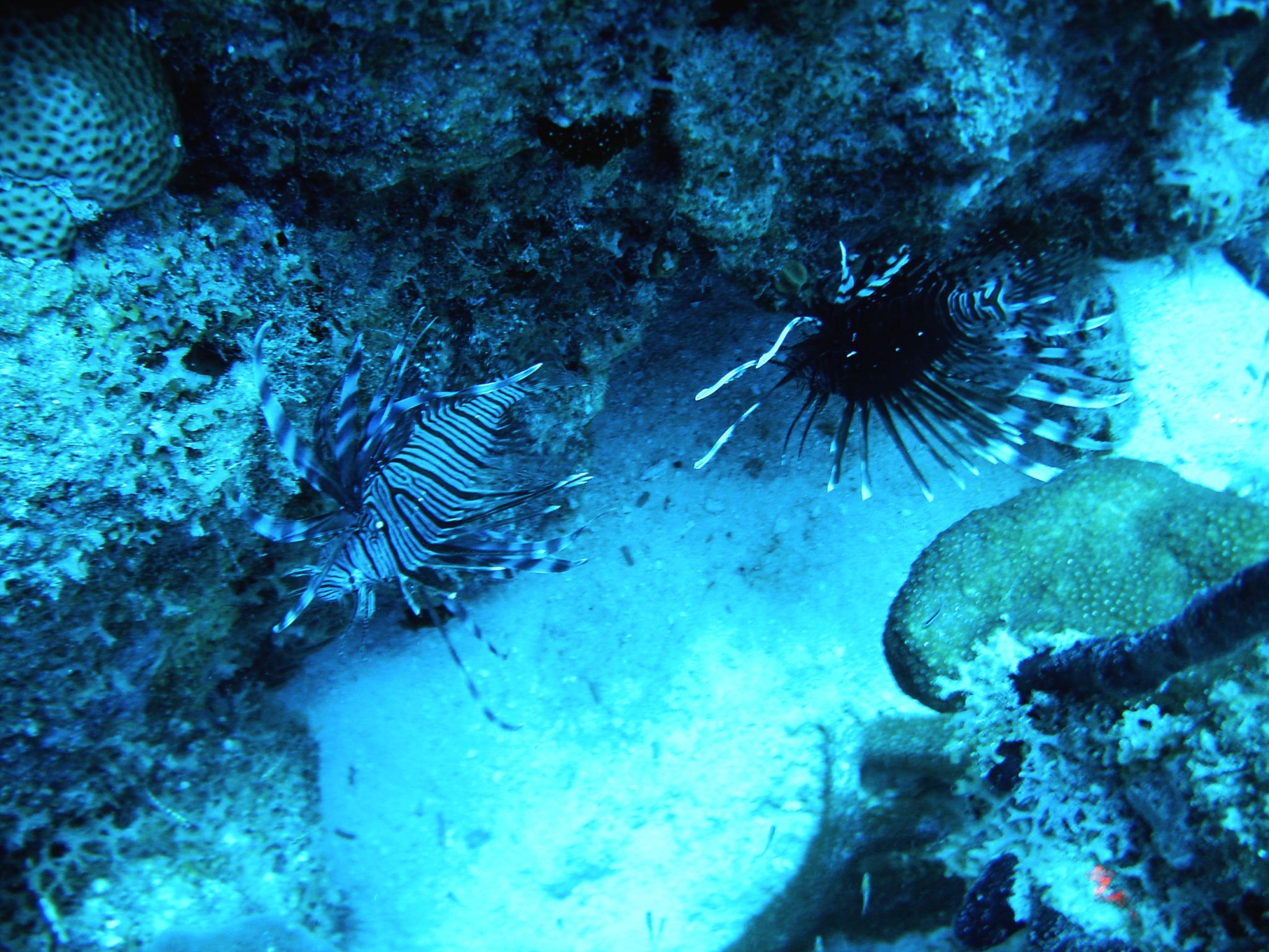 Republique_dominicaine_roadtrip_bayahibe_plongee_scubafun_rascasse_dominicus_reef