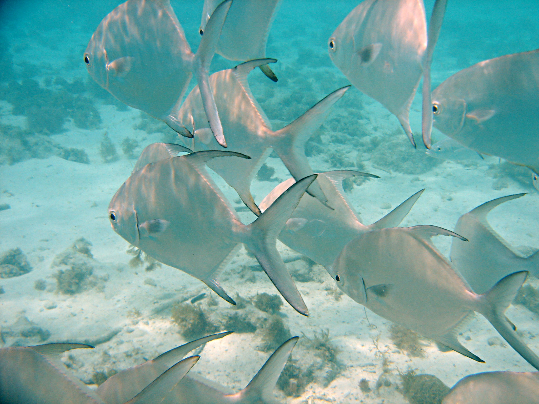 Republique_dominicaine_roadtrip_voyage_bahia_banc_poisson_snorkeling