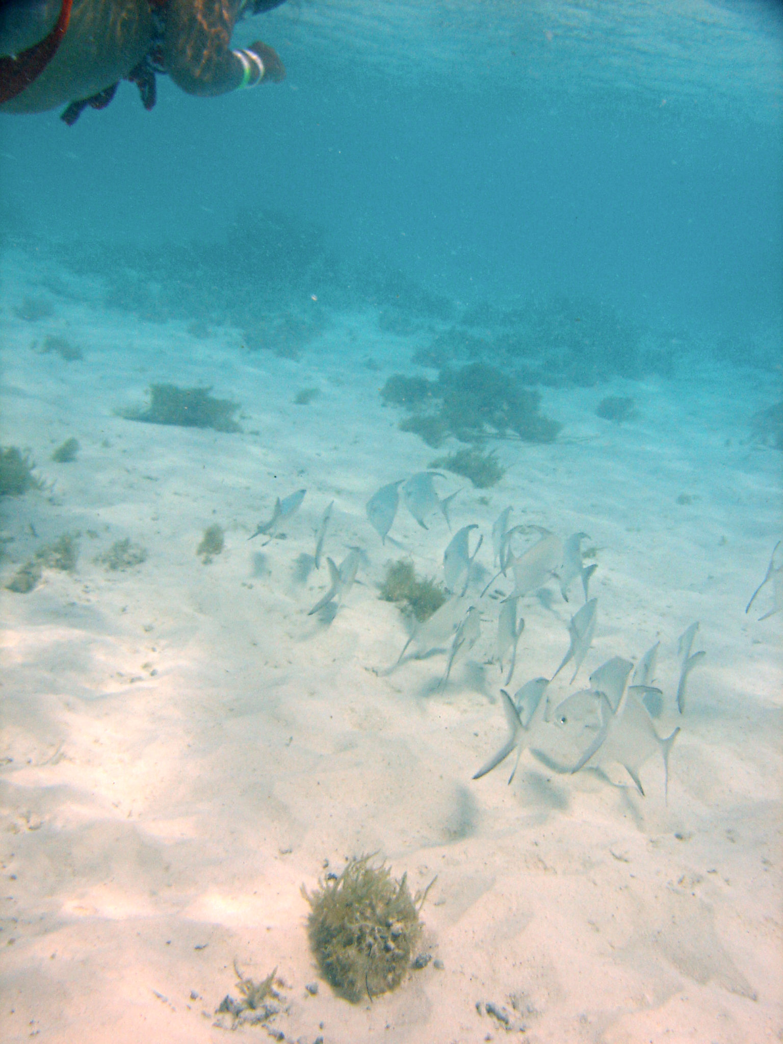 Republique_dominicaine_roadtrip_voyage_bahia_banc_poisson_snorkeling_hema