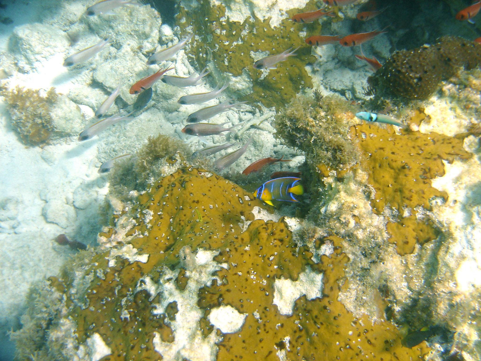 Republique_dominicaine_roadtrip_voyage_bahia_poissons_snorkeling