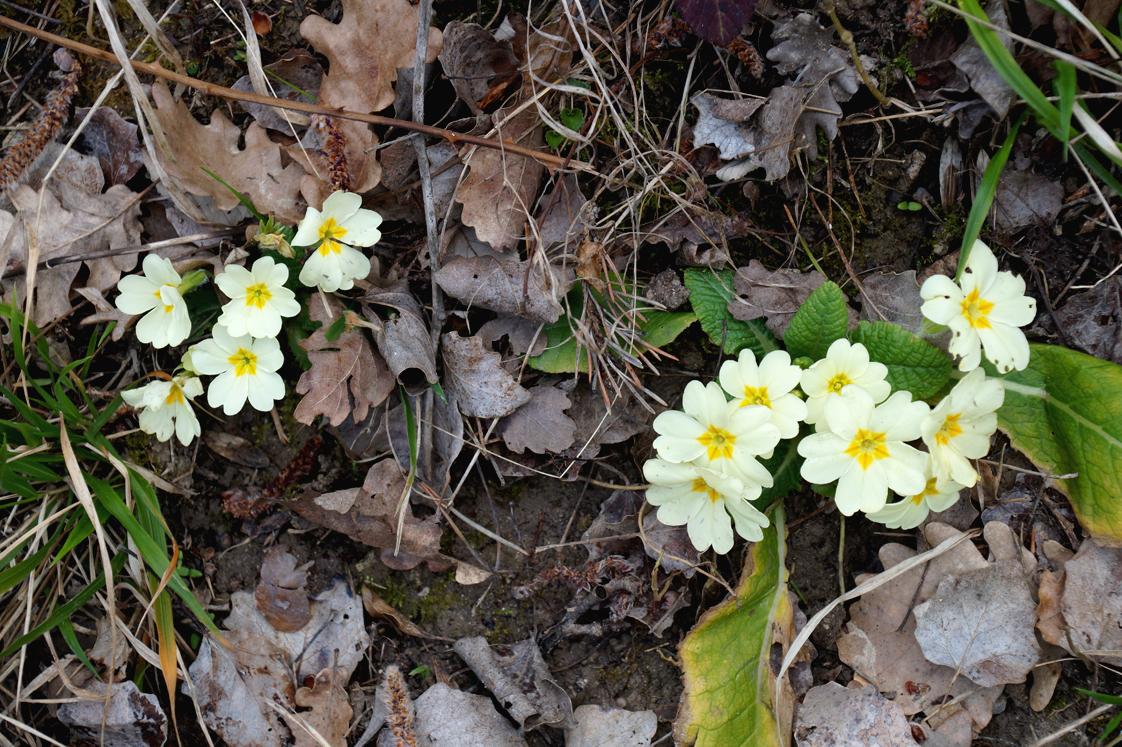 Rustrel_colorado_provencal_fleurs_sentier
