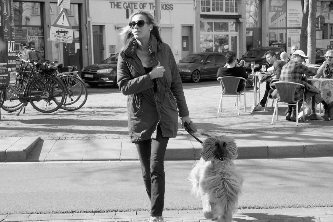 Hema_pose_ses_valises_anvers_chien_levrier_afghan