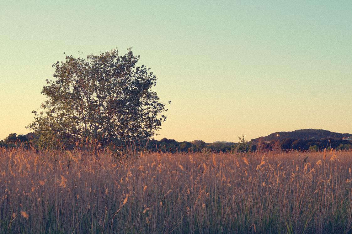 Hema_pose_ses_valises_la_petite_camargue_arbre_coucher_soleil